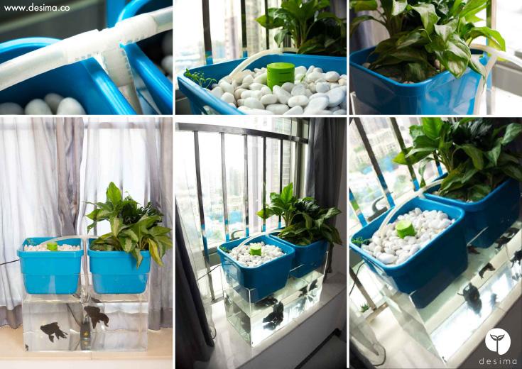 aqua-garden-aquaponics
