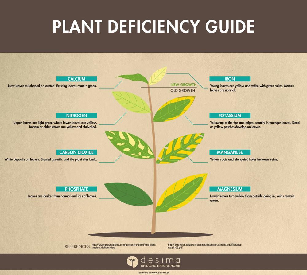 Identifying Plant Nutrient Deficiencies Desima